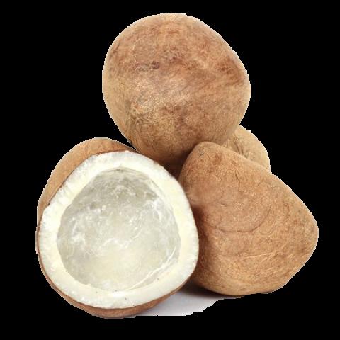 coconut exporters in india
