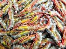 Marine (Seafood) Exports